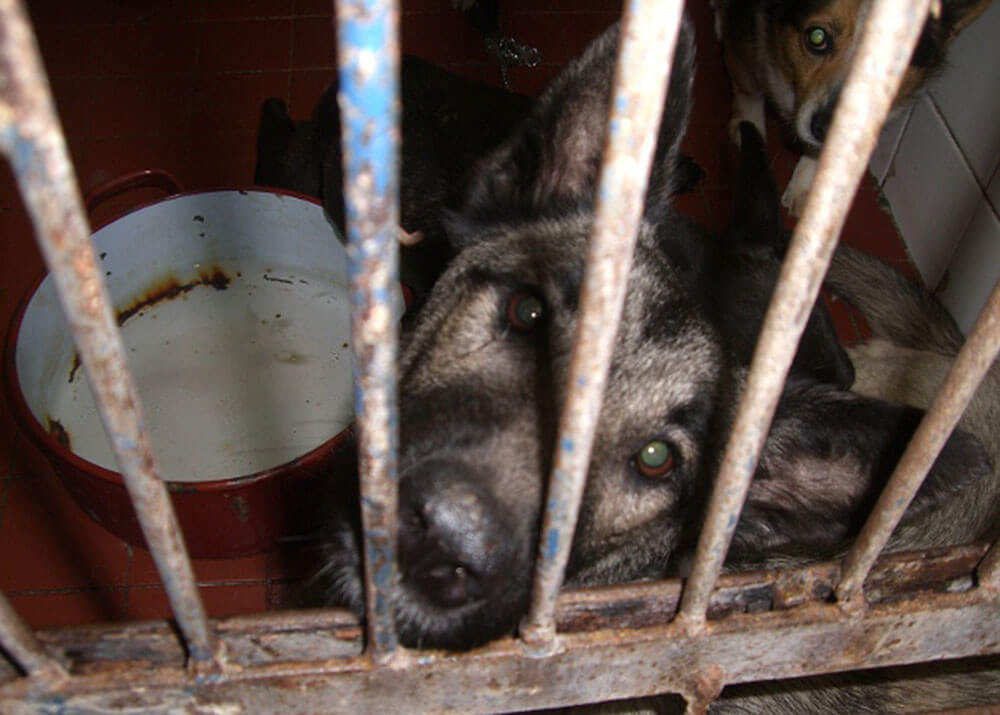 Animal Care Austria - Slovakia