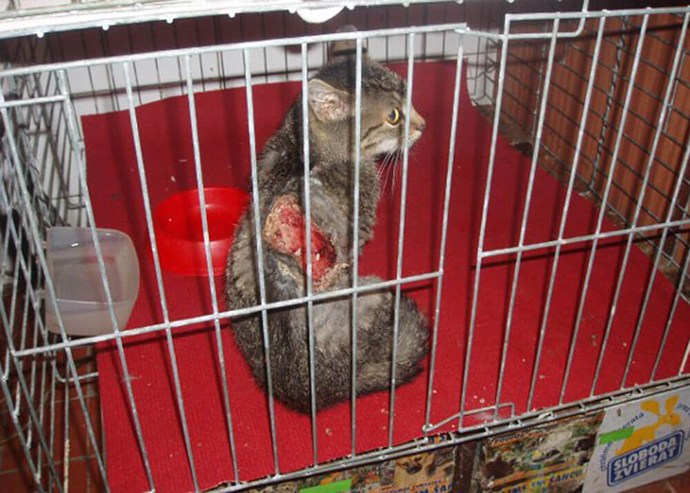 Animal Care Austria Slovakia