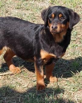 Animal Care Austria - Hunde in Österreich und Ungarn